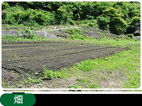 畑:農作業体験できます(要予約)。
